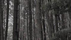 Gunung Pancar (Vicky Ming Alditiara) Tags: video alam nature shortmovie shortvideo keren landscape bogor indonesia jakarta kepulauan seribu pulau gunung pancar camping braja sukamantri tree pinus pantai laut bukit d7000 nikon nikond7000