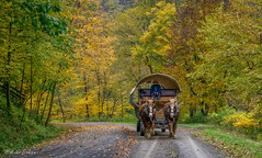 Ole' Covered Wagon rides (melike erkan) Tags: tiogacounty pa pennsylvania outdoor coveredwagon olecoveredwagonrides wellsboro autumn leaves canyon pinecreek grandcanyonofpennsylvania path