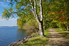 Walking Trail Along The Ottawa River (Jeannot7) Tags: montebello ottawariver qubec fall autumn trees