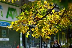 Golden autumn (mihail_krastev) Tags: seasons autumn fuji xt1 tokina