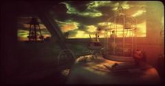 Black Kite Sunset (Jamiecat *) Tags: world life kite black hot spot sl virtual second destination metaverse