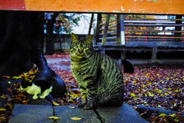 Today's Cat@2014-12-01