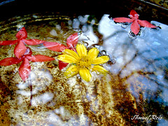 #Water & #Flowers (roizroiz) Tags: trip flowers red flores water colors beautiful yellow wonderful lights interestingness amazing fantastic magic great yesterday today magichour preciously interesantsimo