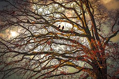 togetherness  in the top of the tree (b.hessmann) Tags: park autumn bird nature weather forest canon germany eos colorful outdoor herbst natur stormy grafik 300mm promenade nrw tamron schloss garten baum mnster mnsterland a