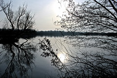 A la lumire d'hiver (Glaneuse) Tags: trees lake reflection water mirror branches swamp marshes