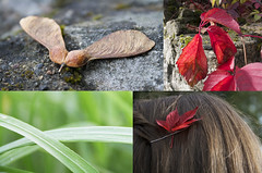 Autumn Quadtych (tiki.thing) Tags: autumn ireland red green nature grass leaves stone wall seed sycamore quadtych