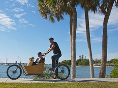 METROFIETS Cargo Bike in sunny Sarasota, Florida (METROFIETS) Tags: beach bike bicycle florida bikes sarasota beachbike cargobike beachcruiser enjoytheride bikelife metrofiets keepriding bikesrq palmtreesandbikes