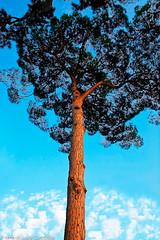 _MG_6780 (Luigi Consiglio) Tags: colore natura giallo aurora nebbia albero autunno rosso paesaggi paesaggio bosco ambiente esterno foresta faggio hornbeam nessuno vegetazione quercia tranquillità protezione cambiamento orizzontale riservanaturale lucesolare sentierodicampagna bellezzanaturale deciduo