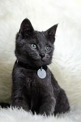Rusky (Riechard) Tags: cat kitten kat familie poes mirjam poesje katje publiek westerhof