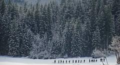 (Sa Shula de Tarifa) Tags: trees italy snow water forest agua rboles italia erasmus nieve lakes tourists lagos bosque turistas caminante fusine laghi