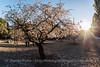 Almendros al Sol (dprats) Tags: madrid flowers parque españa sun flores primavera sol spring spain blossom fisheye flare invierno 15mm quintadelosmolinos d800 almondblossom almendros comunidaddemadrid ojodepez 2015 sigma15mmf28 almendrosenflor nikond800 danielprats tiempoprimaveral primavera2015