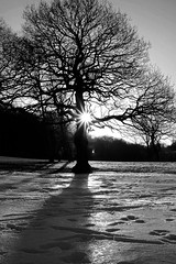 Beauchief Golf Course in Winter (Tor Olav) Tags: winter sun snow tree ice shadows sheffield golfcourse snowtrails fujifilmxpro1
