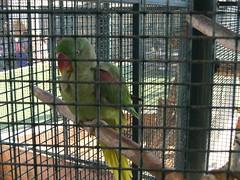 fauna zoo uae abudhabi parrots unitedarabemirates cagedbirds zoologicalgardens psittaciformes psittacines emiratesparkzoo samhaabudhabi