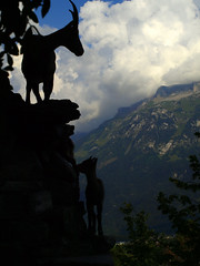 Swiss Ibexes Silhouette