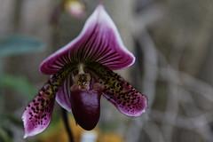 dots (gman.light) Tags: flowers flower canon petals cleveland clevelandohio 5d botanicalgardens clevelandbotanicalgardens canoneos5dmarkiii