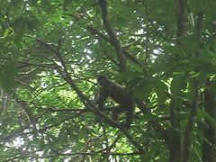 Monkey Climbing