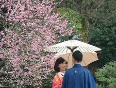 2015. Japn. Okayama.  Kraku-en. (Marisa y Angel) Tags: trees en flower primavera japan garden march spring blossoms sakura justmarried journeys okayama plumblossoms japn 2015 honsu recincasados ciruelosenflor kraku