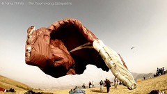 Deflating Tandem Wing (theboomerangescapades) Tags: india flying wings lonelyplanet paragliding mumbai lifeisgood kamshet travellife gopro goprohero tandemparagliding beautifuldestinations cntraveller travelgram lonelyplanetindia bbctravel amazingparagliding
