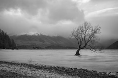That Wanaka Tree (Josh Hickinbotham) Tags: wanaka tree lake lonetree thatwanakatree canon7d bw blackandwhite