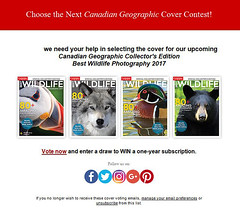 Best Wildlife Photography Cover (Megan Lorenz) Tags: wild ontario canada nature wolf quebec wildlife cover blackbear wildanimals coverimage mlorenz meganlorenz