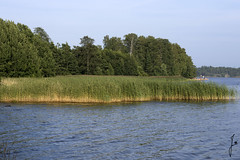 A bed of reeds (jannaheli) Tags: suomi finland helsinki luonto nature maisema landscape taivas sky meri ocean vett water kaislikko abedofreeds nikond7200