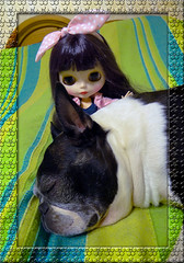 Bostonterrier Fusya & Priana (dean.dromos) Tags: cute bostonterrier doll little sweet littlegirl blythe lovely blythedoll prettylittlething dollphoto dollphotograph