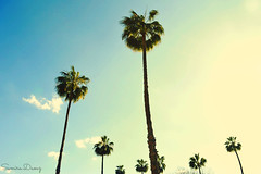 Summer Vibes (Samira.Daouz) Tags: summer marrakech palmtrees