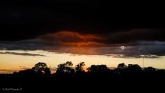 DSC_0249 (timmie_winch) Tags: nikon nikond3000 d3000 august august2016 2016 sun sunset sunsetsuffolk sunsetoversuffolkcountryside sunsetovercornfields sunsetovercornfield silhouette 18105mm 18105vr nikon18105mmvrlens shadows golden goldenhour goldenlight elliedunn ellie eleanordunn ells eleanor ellsdunn dunn landscape landscapephotography landscapephotographer naturephotographer naturephotography nature timwinchphotography tim timwinch winch debenham ip14 suffolk