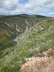 Slopes of canyon with wildflowers, Uvac Nature Reserve, Serbia (Paul McClure DC) Tags: uvac naturereserve serbia srbija zlatibor may2016 vidikovac sjenica druinie scenery canyon