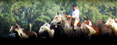 Distintos tobianos (Eduardo Amorim) Tags: cavalos caballos horses chevaux cavalli pferde caballo horse cheval cavallo pferd cavalo cavall tropilla tropilha herd tropillas tropilhas     crioulo criollo crioulos criollos cavalocrioulo cavaloscrioulos caballocriollo caballoscriollos ayacucho provinciadebuenosaires buenosairesprovince argentina sudamrica sdamerika suramrica amricadosul southamerica amriquedusud americameridionale amricadelsur americadelsud eduardoamorim gaucho gauchos gacho gachos