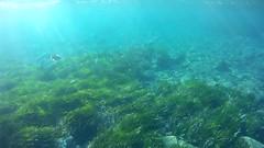 Mas salpas pero con sol (AAcero) Tags: buceo diving almera cabodegata isub