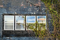 (i heart him) Tags: windows plant building brick green nature wall climbing