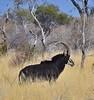Botswana Hunting Safari 27