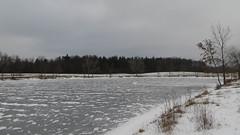 turtlehead lake. december 2013 (timp37) Tags: christmas xmas winter lake ice frozen illinois december 25th heights palos turtlehead 2013