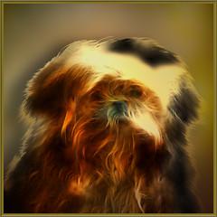 The red dog (jaci XIII) Tags: red dog cão animal vermelho cachorro