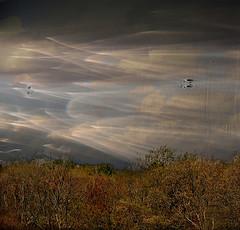 *** (shumpei_sano_exp7) Tags: trees sky abigfave platinumphoto infinestyle multimegashot hourofthesoul