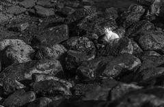 Sea Cat (Muhammad Al-Qatam) Tags: ed ii nikkor vr afs 70200mm f28g