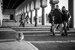 Alone (stejo) Tags: stockholm pigeon streetphotography townhall streetphoto stadshuset duva voigtlander254 ilobsterit
