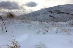 Snow and grasses (barronr) Tags: snow grass walking scotland edinburgh view hill pentlands midlothian