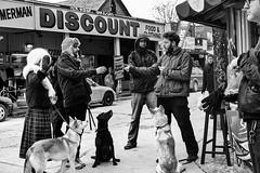 """NO PAPPARAZZI!!!! NO PAPPARAZZI!!!! NO PAPPARAZZI!!!!"" she screamed (Anne J Gibson) Tags: street toronto dogs streetphotography streetscene kensingtonmarket papparazzi streetdogs annejgibson torontoontariotorontocanada"