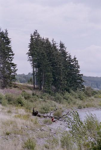 Am Waldstrand