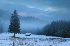 winter foggy morning on alpine meadow (Olha Rohulya) Tags: morning blue winter wild white mist snow alps cold nature misty fog pine rural forest germany season landscape outside outdoors bavaria countryside early wooden scenery view dusk seasonal scenic meadow nobody nopeople hut alpine german spruce coniferous bavarian