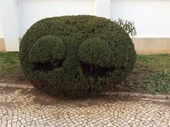 Um. Garfield lookalike in Olho? (cyclingshepherd) Tags: portugal cat bush topiary cartoon greenery algarve february shrub garfield lookalike olho 2015 cyclingshepherd