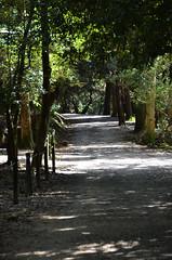 Quiet Nara Path (pokoroto) Tags: autumn japan october quiet path  nara kansai 2014 10    naraprefecture  kannazuki   themonthwhentherearenogods 26