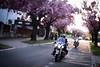 Harley dreams - TS-E lens + 6D