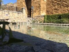 Paseos por Crdoba (Rafael Reyes Foto) Tags: agua fuente crdoba patos