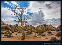 rbos en Hidden Valley 2 (Nacho Cabellos) Tags: california joshuatree paisaje mojave hiddenvalley mojavedesert joshuatreenp