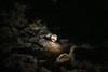 The Covered Moon (GeraldDeschain) Tags: cloud moon night clouds canon dark stars noflash dslr nwn darky f20 140mm 650d t4i allmanual canon650d rebelt4i geralddeschain