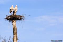 birds together (seryogadesign) Tags: camera bird home look birds nest together vgel vogel zusammen schauen