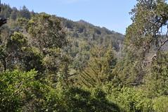 DSC_0370 (oblomberg) Tags: bigsur hwy1 pfeifferstatepark montereyca